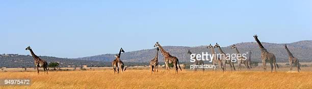 serengeti panorámica - tanzania fotografías e imágenes de stock