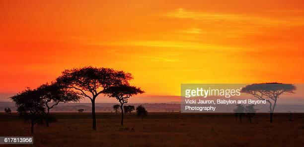 Serengeti Sunrise Panorama