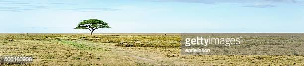 Serengetti Landscape