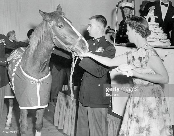 Sergeant Reckless the Government's only genuine horse Marine finds the cake to her liking as she is fed by Mrs Eric Pederson wife of Lt Eric Pederson...