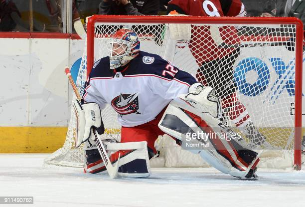 Sergei Bobrovsky of the Columbus Blue Jackets gets ready to make a save against the Arizona Coyotes at Gila River Arena on January 25 2018 in...