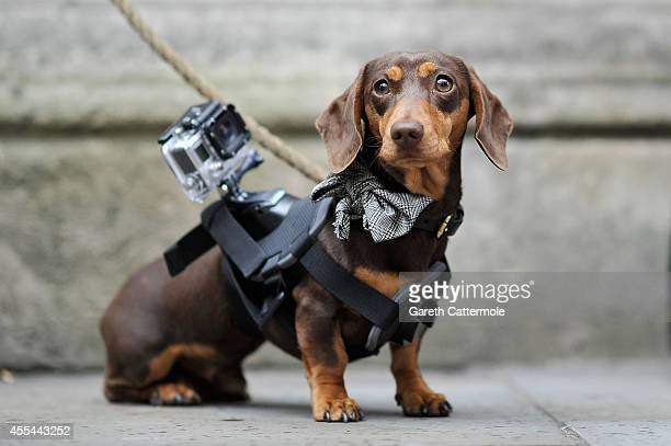 Sergio the Shoe Hunter is seen with his GoPro camera outside the Matthew Williamson show during London Fashion Week Spring Summer 2015 at on...