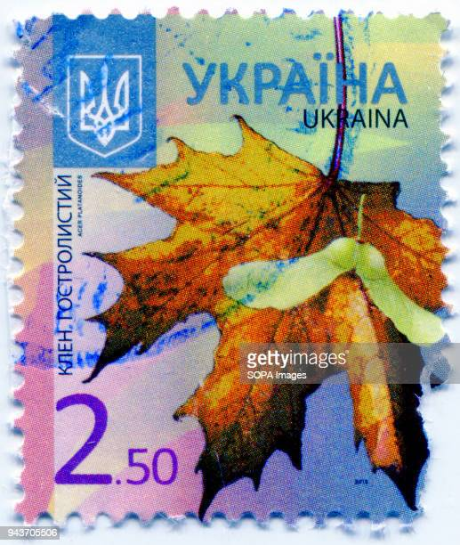 A series of 'Flora of Ukraine Postage stamp shows the image of Acer platanoides or Norway maple Ukraine 2012