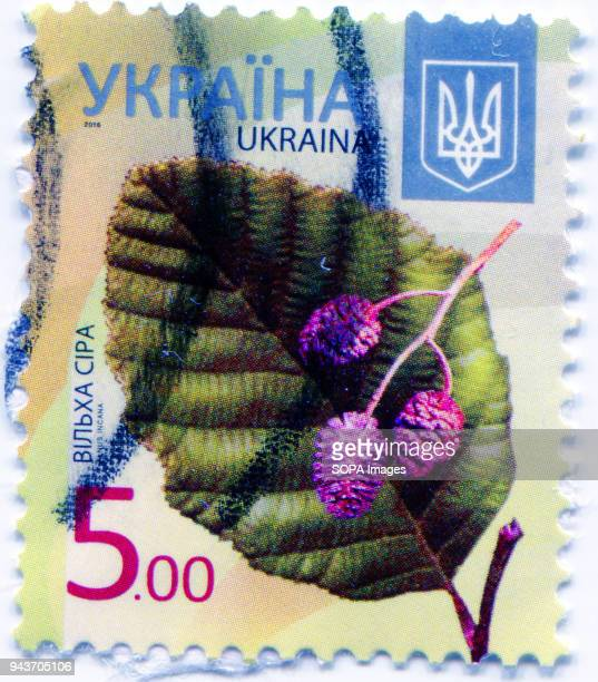 A series of 'Flora of Ukraine Postage stamp shows the image of Alnus incana the grey alder or speckled alder Ukraine 2016