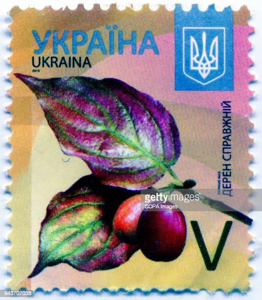 A series of 'Flora of Ukraine Postage stamp shows the image of Cornus mas Ukraine 2015