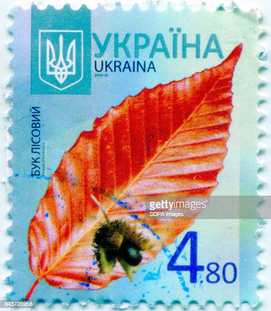A series of 'Flora of Ukraine Postage stamp shows the image of Fagus sylvatica the European beech or common beech Ukraine 2012