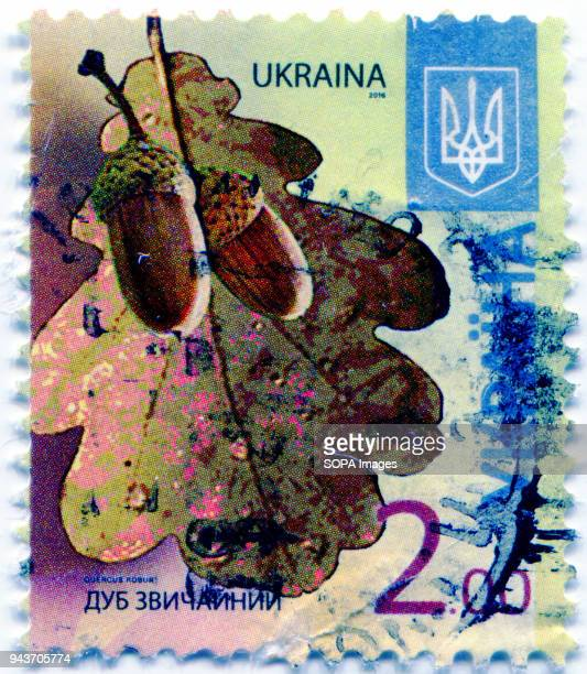 A series of 'Flora of Ukraine Postage stamp shows the image of Quercus robur commonly known as common oak pedunculate oak European oak or English oak...