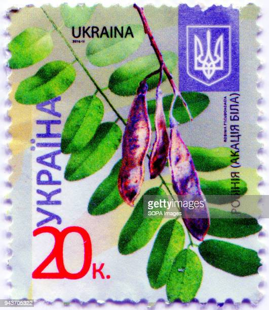 A series of 'Flora of Ukraine Postage stamp shows the image of Robinia pseudoacacia commonly known in its native territory as black locust Ukraine...