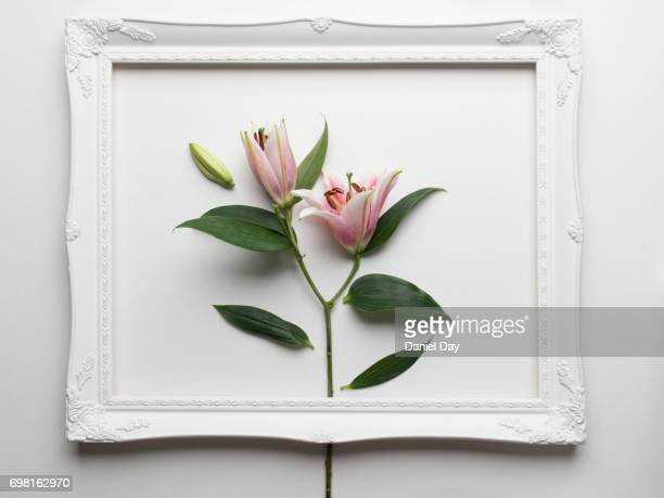 Series of images of different flowers inside a white frame on a white background