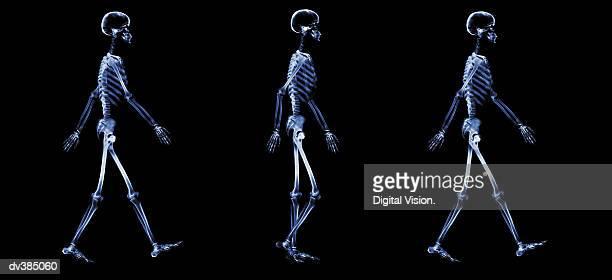 series of walking skeletons - human skeleton stock pictures, royalty-free photos & images