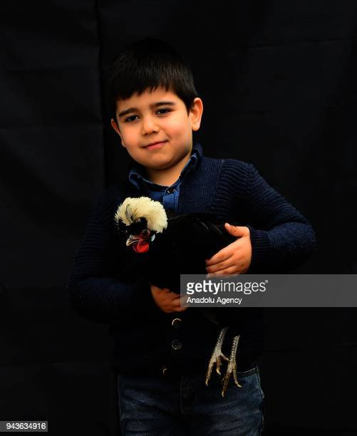 Serif Sari, a 7 years old boy, poses for a photo with a Nun Fizan chicken as he participates with his father in the Ornamental Chicken Fair and...