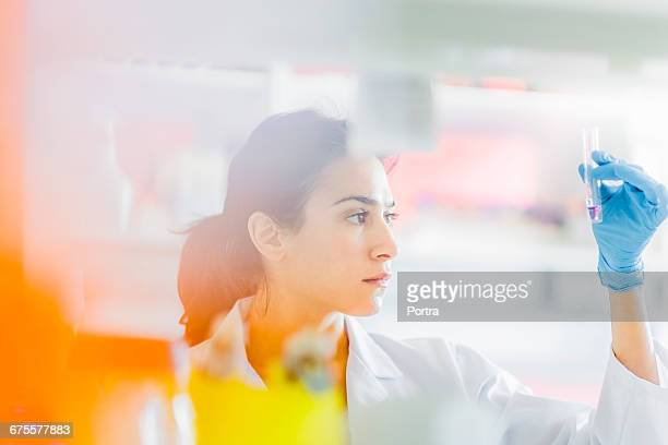 serious chemist holding test tube in laboratory - 科学者 ストックフォトと画像