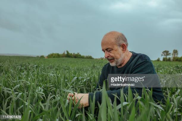 serious thoughtful farmer - agronomist stock pictures, royalty-free photos & images