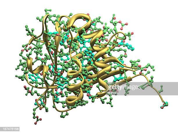 Serotonin-Acetyltransferase
