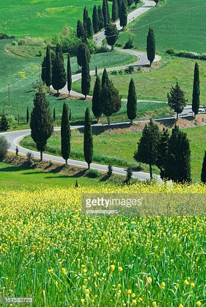 Serpentine Road, Val d'Orcia