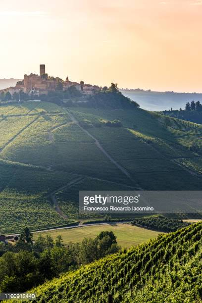 serralunga d'alba, barolo wine region, langhe, piedmont, italy. vineyards, castles and green landscape in summer. - piedmont italy stock pictures, royalty-free photos & images