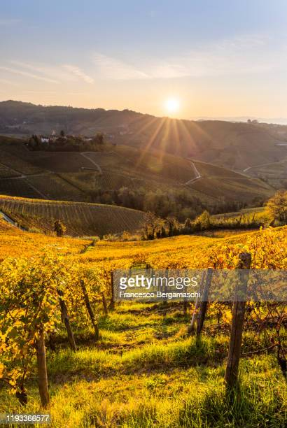 serralunga d'alba vineyards at sunset. - italia ストックフォトと画像