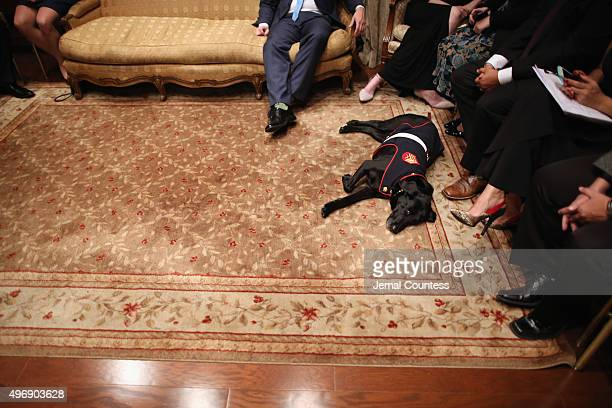 A service dog attends the 9th Annual IAVA Heroes Gala at the Cipriani 42nd Street on November 12 2015 in New York City