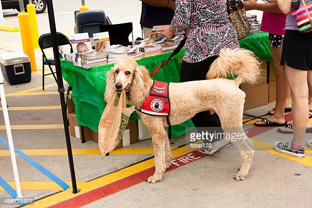 Service Dog in training at an emergency prepardness fair