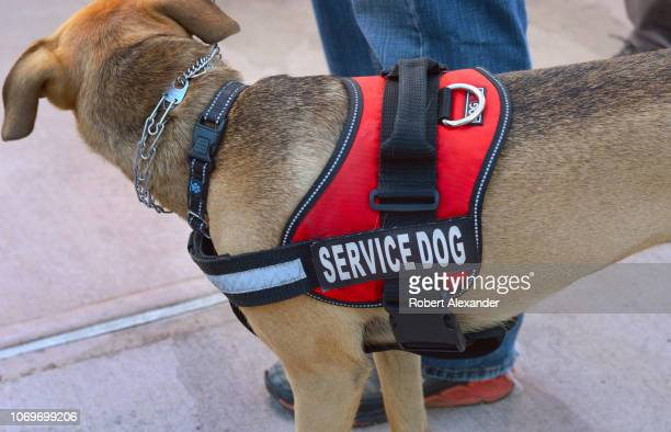A service dog on a leash stands beside its owner in Santa Fe New Mexico
