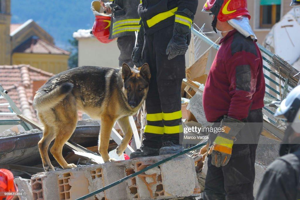 Service Dogs : Stock-Foto