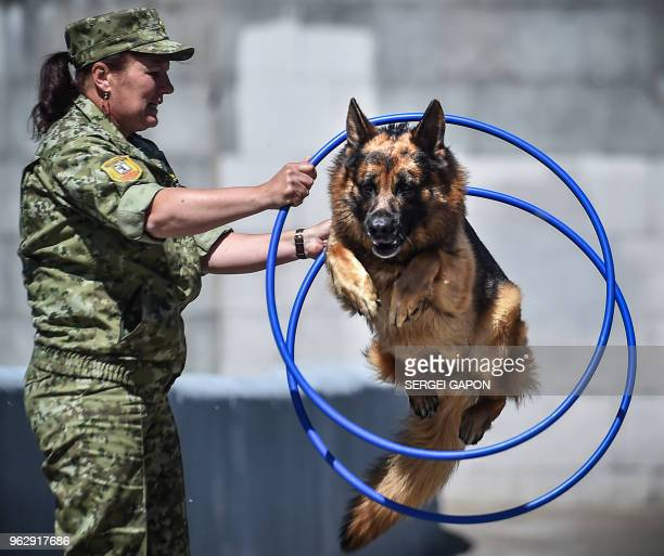 A servicewoman demonstrates her dog's skills during a show devoted to the 100th anniversary of the Belarussian Border Guard Service in Minsk on May...