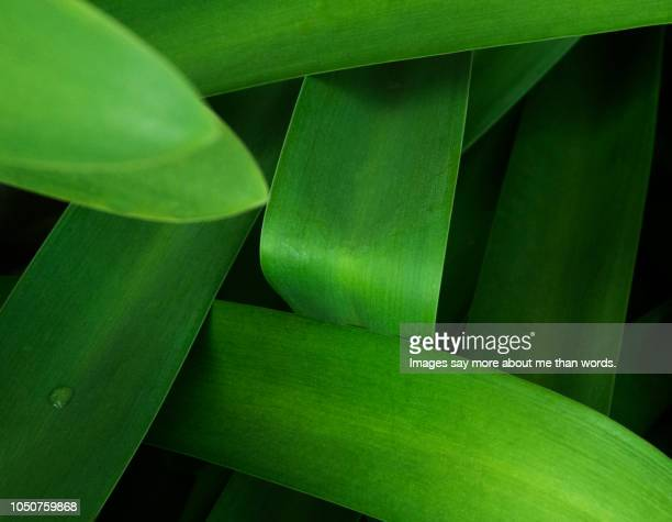 A set of green leaves forming an intricated pattern.