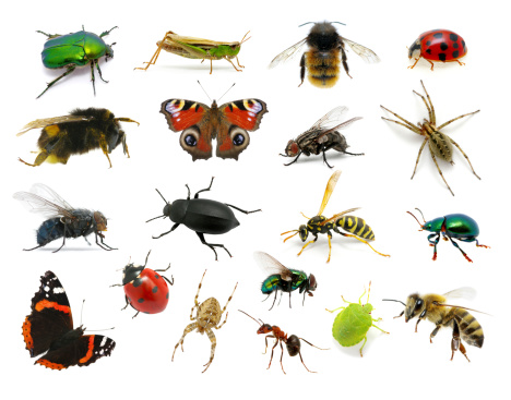 Set of insects 177793593