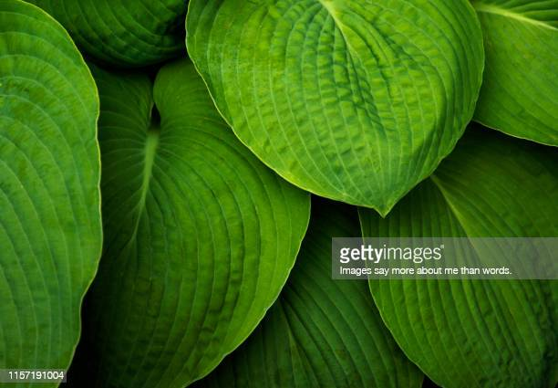 a set of leaves forming a beautiful patter. still life. - chlorophyll stock pictures, royalty-free photos & images