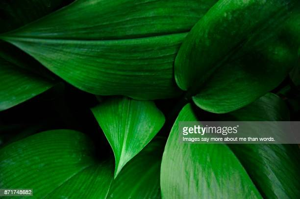 set of leaves forming a beautiful pattern. - groene kleuren stockfoto's en -beelden