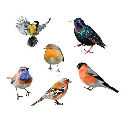 set of many birds of European part on white isolated background 1077226830