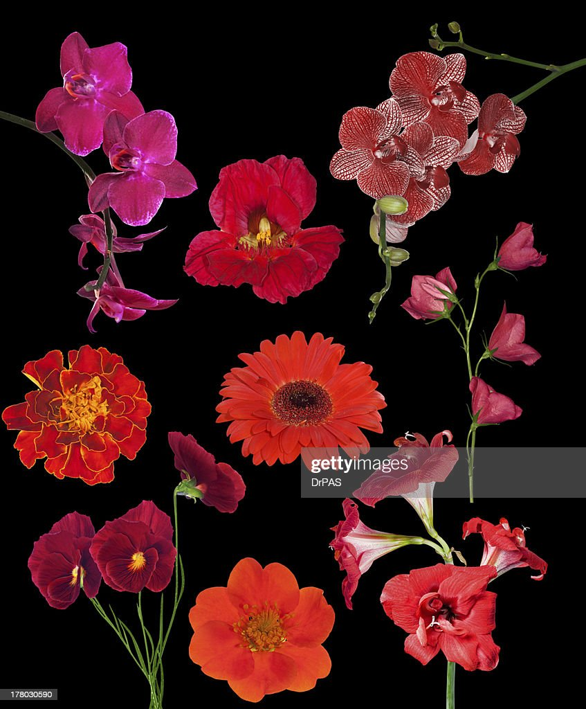 Set Of Nine Red Color Flowers Isolated On Black Stock Photo | Getty ...