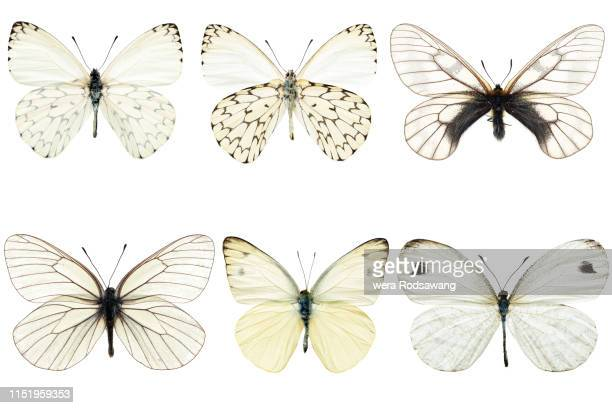 set of six white butterflies - schmetterling stock-fotos und bilder
