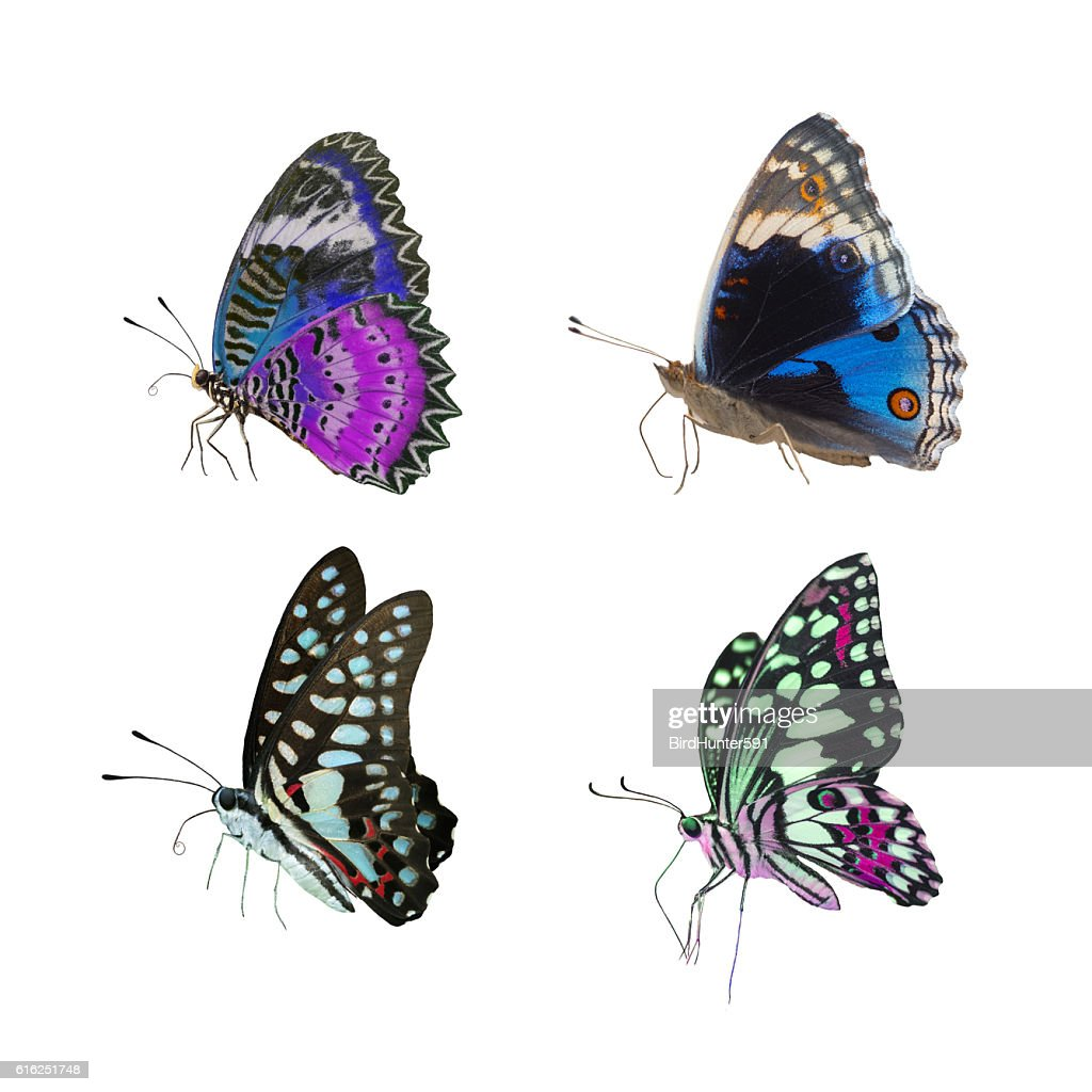 Set of the most beautiful butterflies : Foto de stock