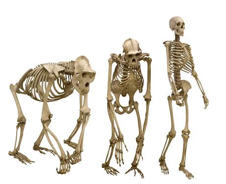 set of three skeletons isolated on white 610867126
