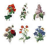 Set of various flowers | Antique Flower Illustrations