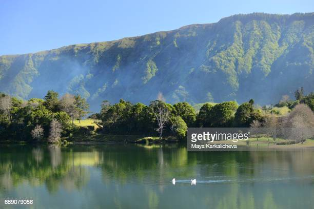 sete cidades lake, azores - duck bird stock photos and pictures