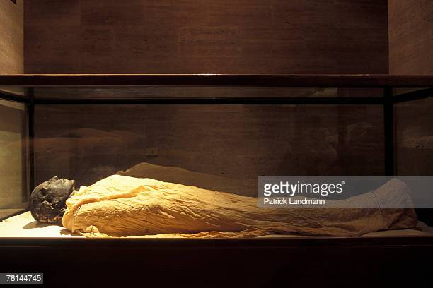 Sethi I in April 2006 at Cairo Museum Egypt The mummy of Seti I bears witness to the mastery of mummification techniques of embalmers of ancient...