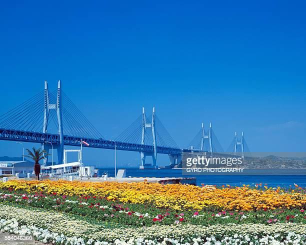 seto ohashi bridge and flower garden, sakaide, kagawa prefecture, japan - kagawa ストックフォトと画像