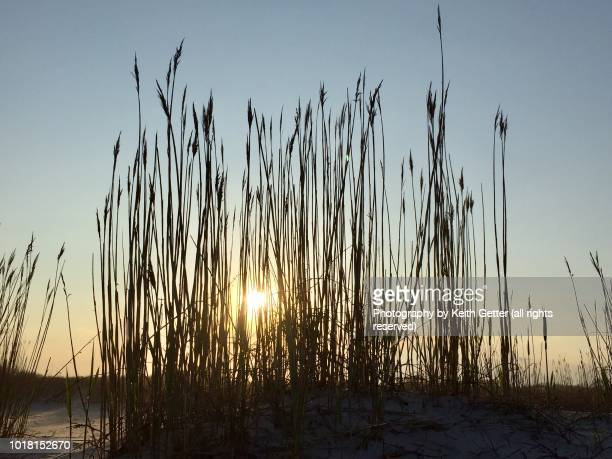a setting sun behind tall beach grass - wantagh stock pictures, royalty-free photos & images