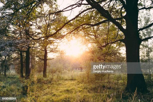 Setting sun in oak grove