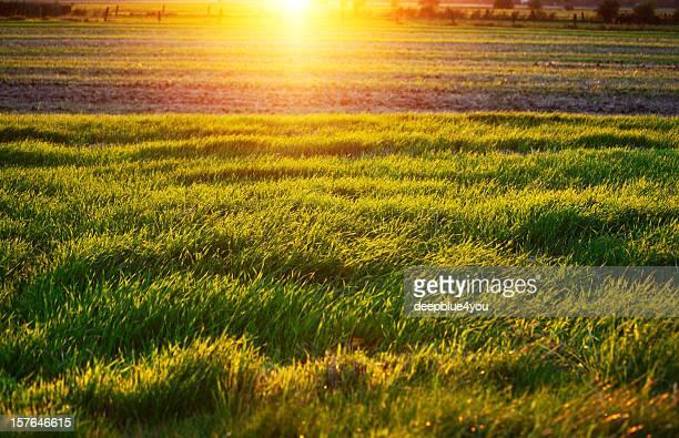 setting sun over a field