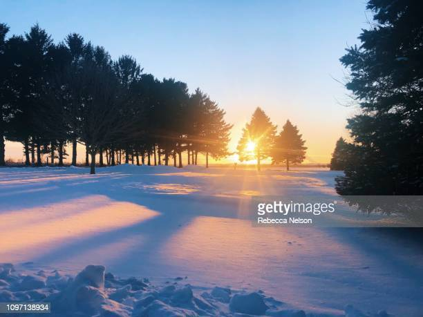 setting sun shining through pine trees on snow covered ground - rebecca nelson stock pictures, royalty-free photos & images