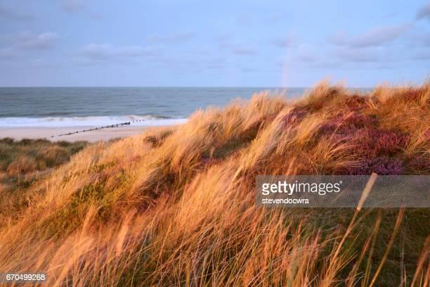 Setting sunlight strikes the sand dunes at Winterton on Sea, Norfolk, UK