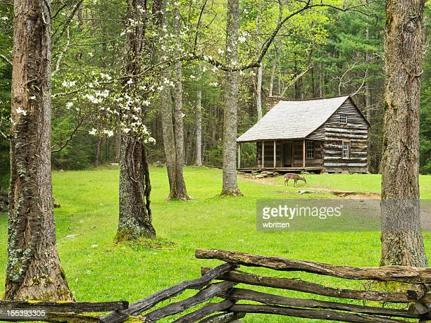 settlers cabin with deer and dogwood - cades cove stock pictures, royalty-free photos & images
