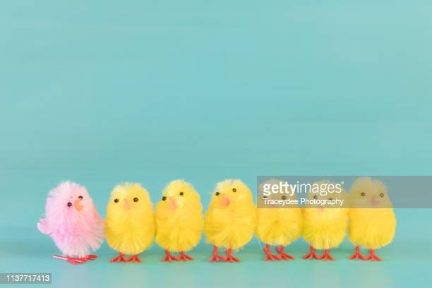 seven baby chickens in a line at easter - easter chick stock pictures, royalty-free photos & images