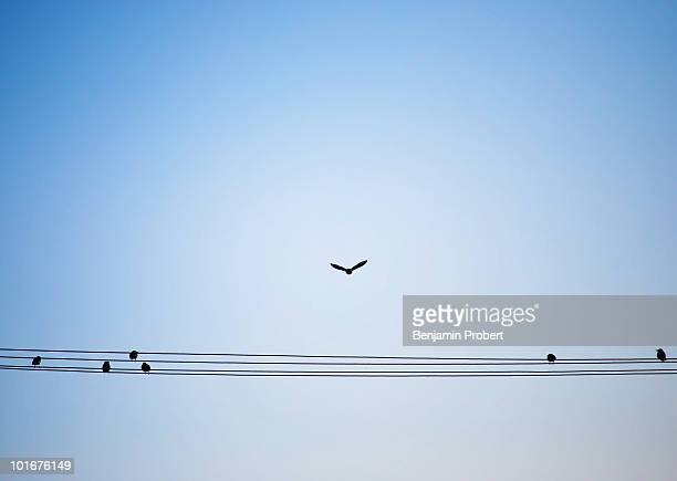 Seven birds on powerlines, one flying away