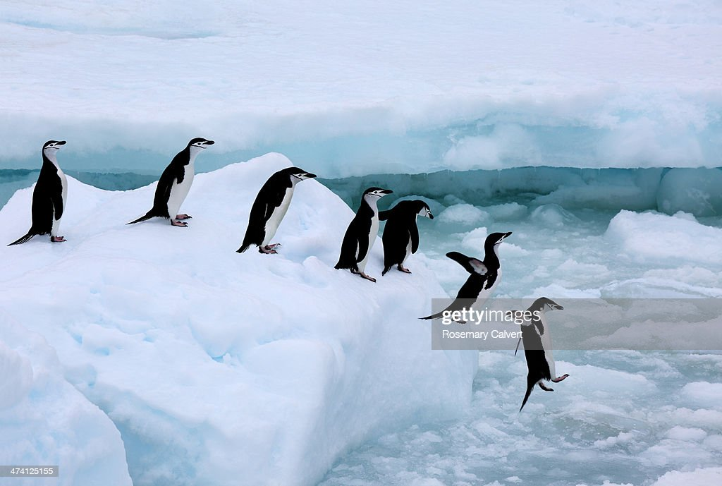Seven chinstrap penuins queueing, Antarctica : Foto stock