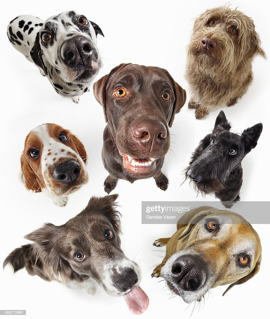 Seven Dogs Looking Up : Stock Photo