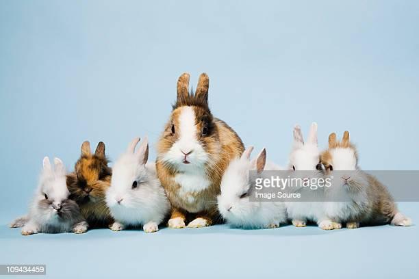 Seven rabbits, studio shot